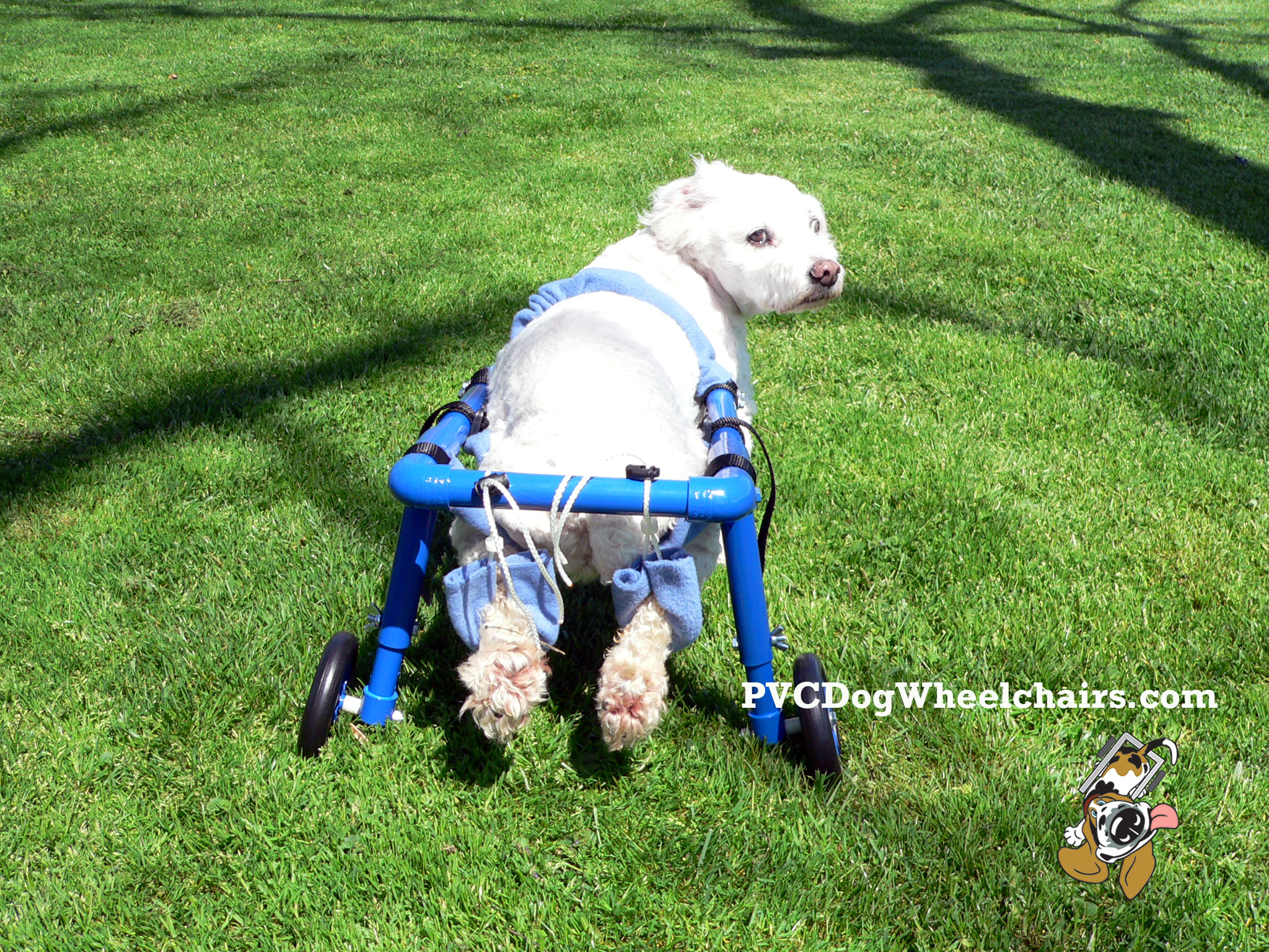 Casey dog wheelchair 2