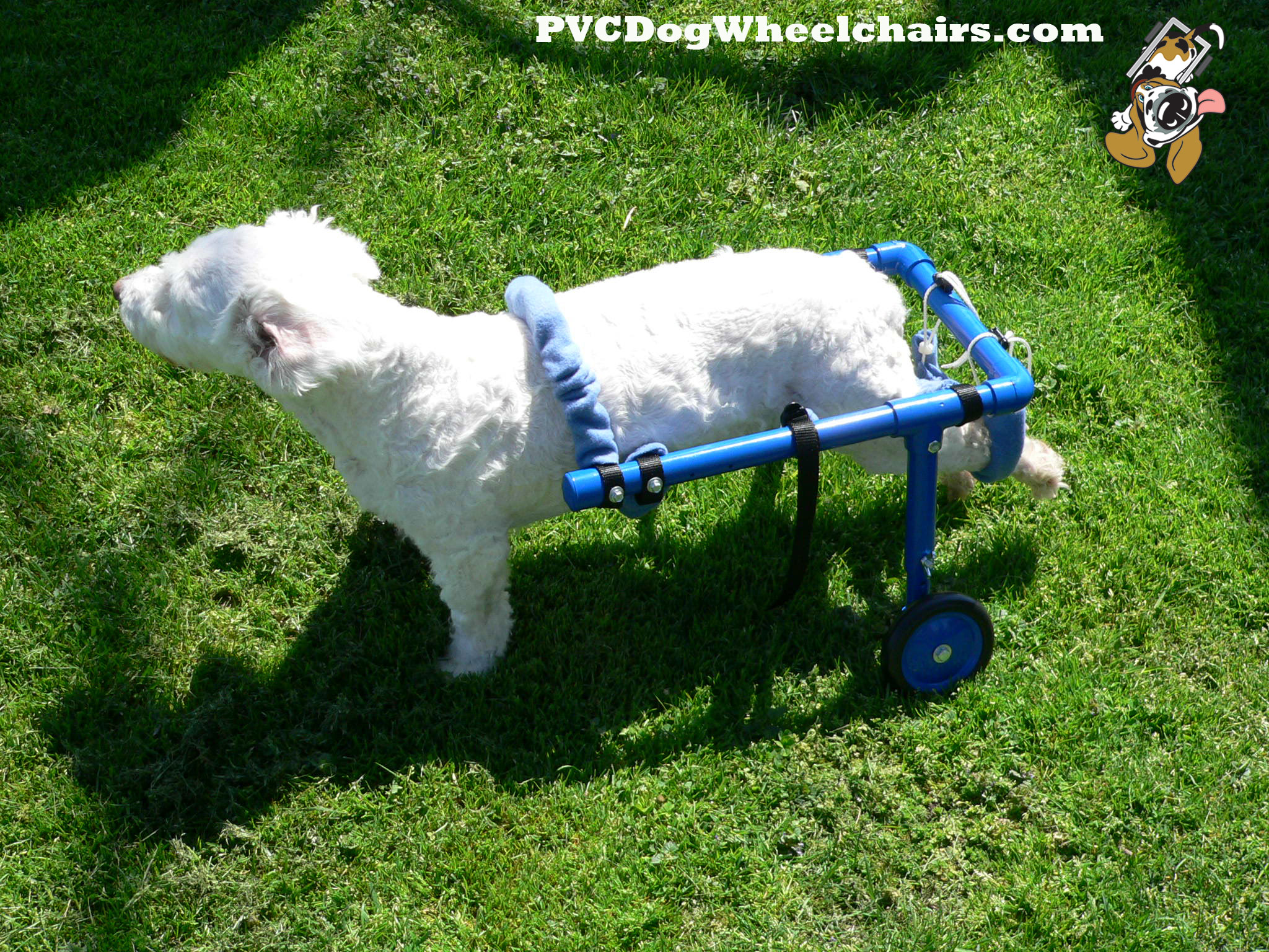 Casey in a dog cart